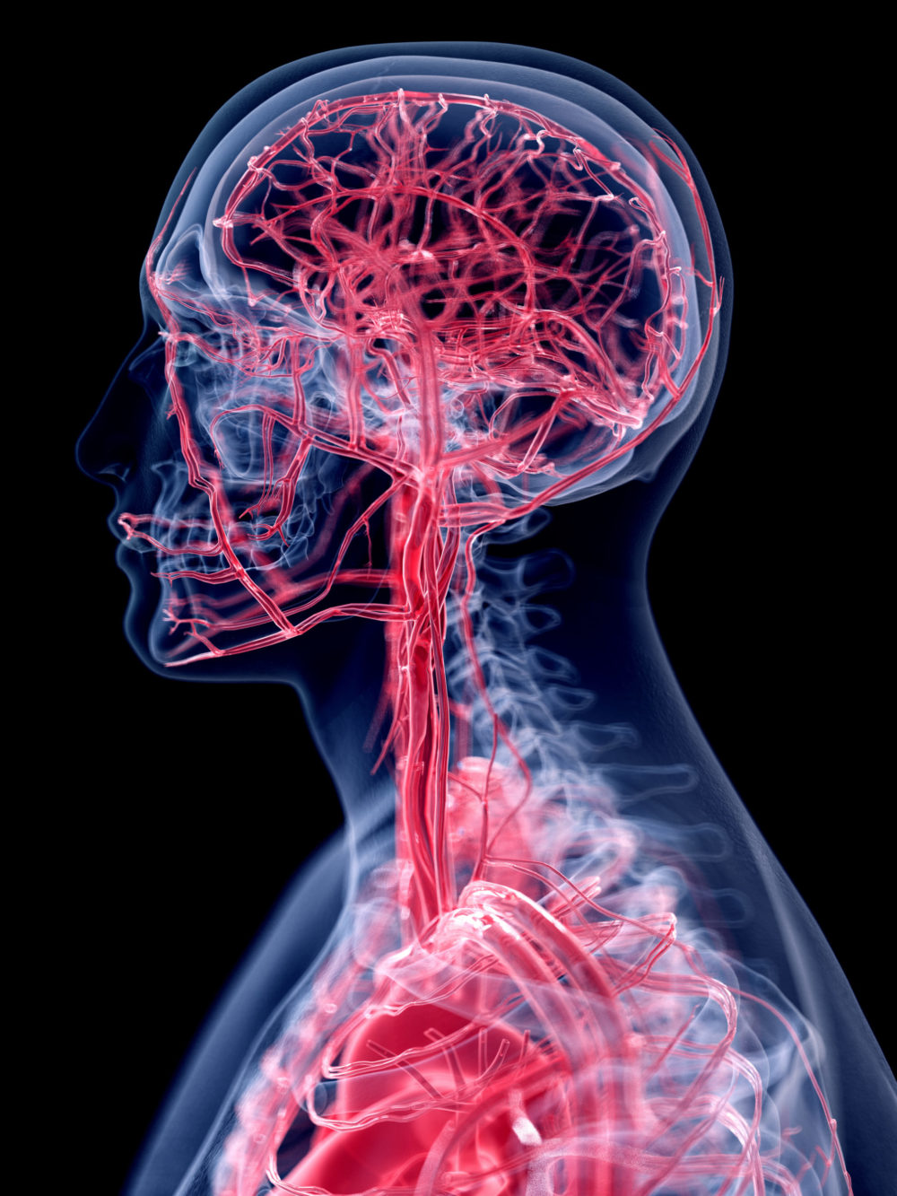 The first head joint, between the base of the skull and the first cervical vertebra is called the atlas.